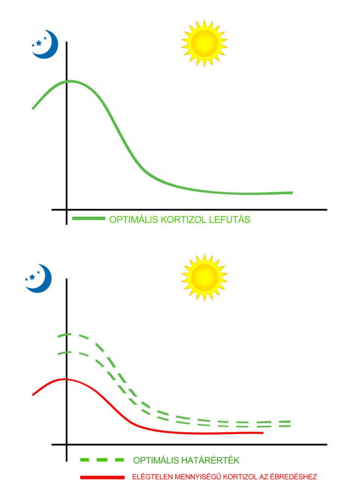 kortizol_graf
